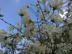 FrühlingMarzahnApril13d