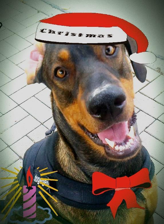 Ole wünscht allen einen tollen 4. Advent!